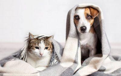 Estudio revela que gatos y perros desarrollaron anticuerpos contra el coronavirus