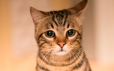 ¡MISTERIOSOS! Cosas sorprendentes que no sabías sobre los gatos
