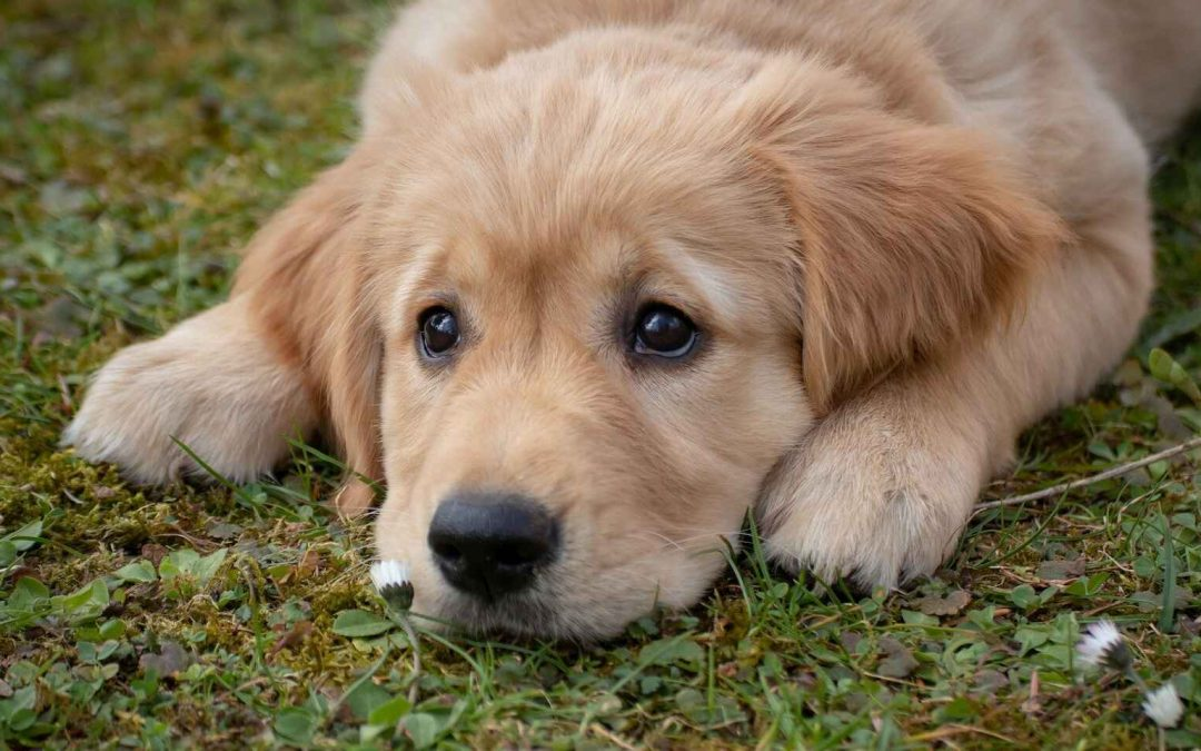 ¡DE INTERÉS! Científicos afirman que los niveles de estrés en los perros se ven afectados por los de sus amos