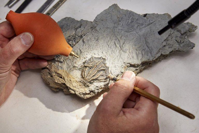 ¡BIEN CONSERVADO! Encuentran un cementerio de criaturas marinas de hace 167 millones de años